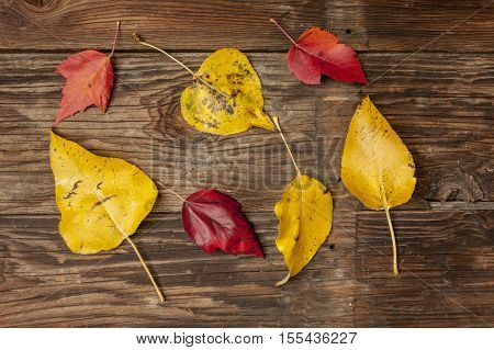 A display of yellow and red leaves laid out on wood.