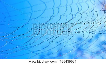 Water drops on spider web over blue sky background. Spider web with morning dew drops.