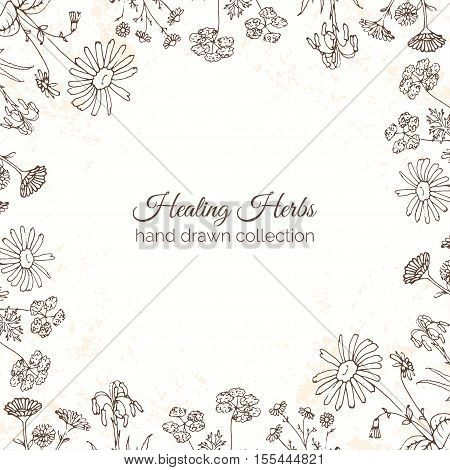 Herbs Illustration. Floral background with grunge texture. Arnica, Aloe Vera, Coriander, Chamomile, Daisy, Mallow, Chicory. Handdrawn Health and Nature collection. Vector Ayurvedic Set. Holistic Medicine. Healing plants.