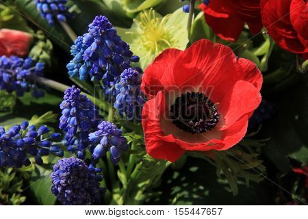 Red and blue spring flower arrangement: anemones ranoncullus and