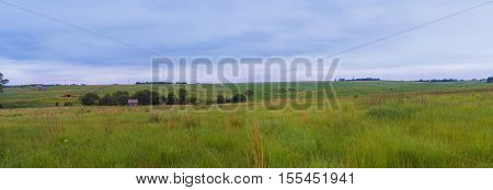 Fields With Rapeseed On The Danish Island Langeland, Europe.