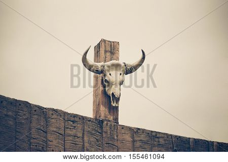 Buffalo skull on concrete poll / Animal hunting and extinction concept