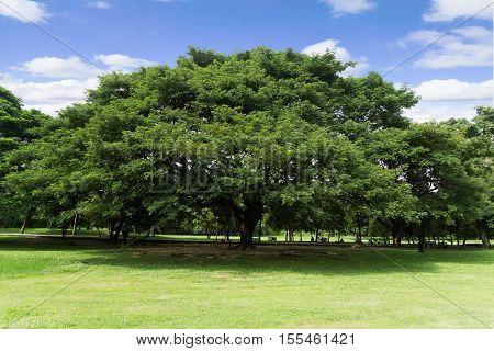 Green park at Vachirabenjatas Park (Rot Fai Park) Bangkok Thailand