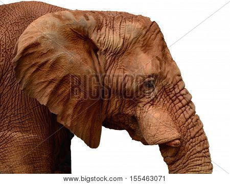 Elephant on white background, ideal for clipping.
