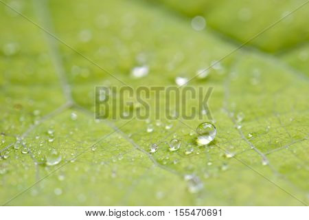 Beautiful Green Plant Leaf With Moisture Drops Of Water From Raining In Nature During Morning Time