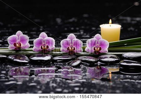 tranquil spa scene-pink orchid and candle with plant