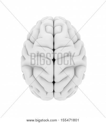 Human Brain Anatomy isolated on white background. 3D render