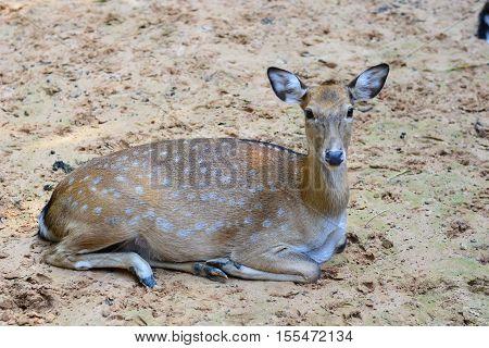 Deer stag buck wildlife animal antler nature