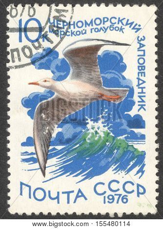 MOSCOW RUSSIA - CIRCA OCTOBER 2016: a post stamp printed in the USSR shows a Larus genei bird the series