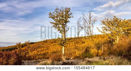 Panoramic View Of Colorful Autumnal Forest
