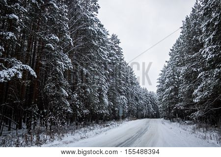 Winter Road In Snowy Forest Landscape. Photo.