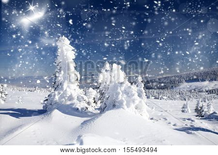 Beautiful winter landscape with snowy fir trees and hoarfrost - Christmas background