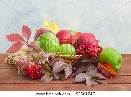 Pile of a red and green apples among autumn leaves and bunches of rowan on a sackcloth in a small wicker basket on a dark wooden surface