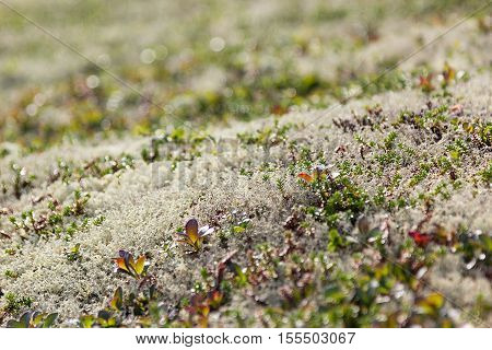 Surface of the white and green moss texture. Arctic background.