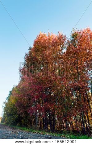 Autumn landscape. Color in nature. On the way