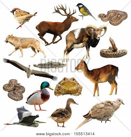 wildlife collection full length animals isolated over white background ready for your design