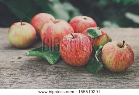 Red and yellow ripe autumn apples scattered on rustic wood background. Seasonal fruit gathering, fall harvest in apple garden, agriculture and farming concept poster