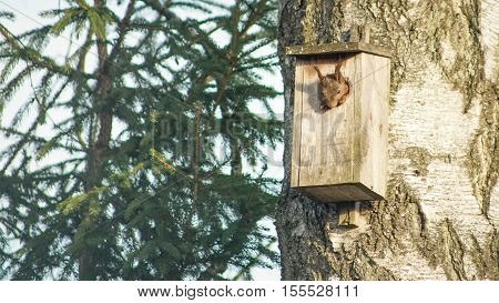 A squirrel has climed into bird house and got stuck in the hole.