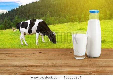 Milk in glass and in bottle on table with grazing cow on the meadow with sunshine in background. Bottle and glass of milk on wooden table with cow. Milk on the background of grazing cow. Milk on table