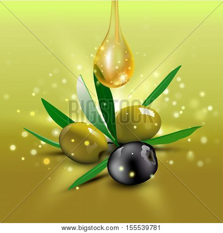 Realistic green and black olives with olive leaves and oil drop on green background. Vector illustration. Olive festival in Spain, Hanukkah