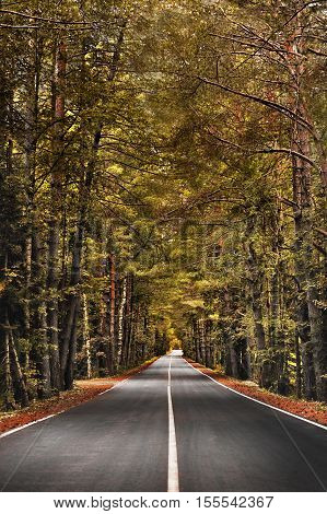 Autumn forest road stretches into the distance