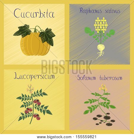 assembly flat shading style Illustrations of Cucurbita raphanus tomato Solanum