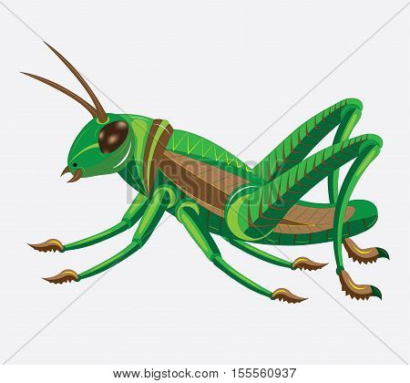 Green grasshopper with brown wings. vector. illustration