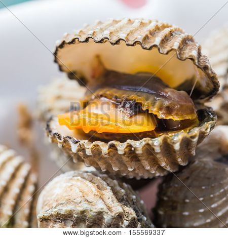 Delicious boiled or steamed cockles(Scallop seafood) food background or manu. shellfish smile. Small. Selective focus.