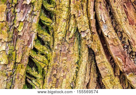 Abstract nature background of old oak tree bark. Age concept or nice natural texture.