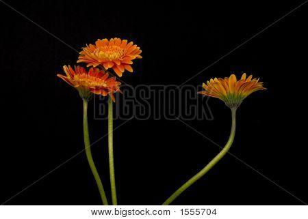 3 Orange Flowers