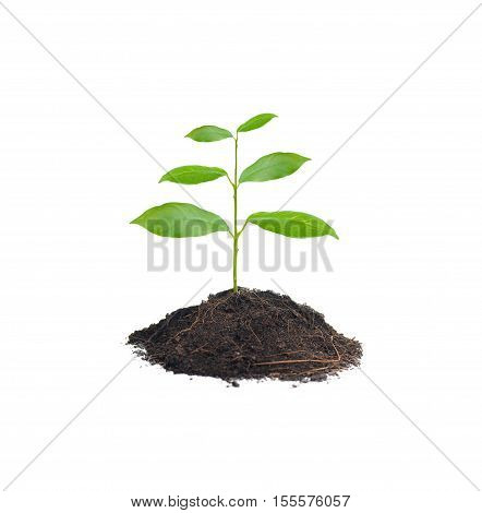 Small plant on pile of soil isolated in white background