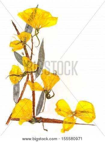 Application  Bouquet Of Dry Iris Leaves  And Yellow Flowers