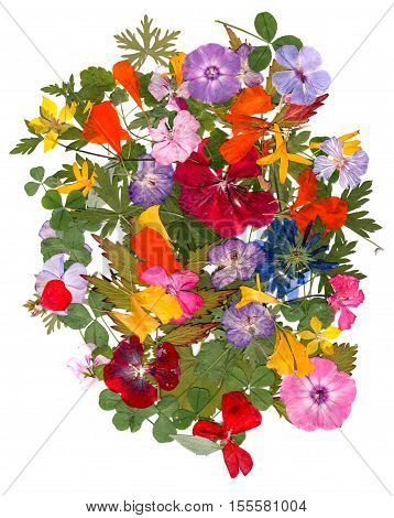Motley Multicolored Applique Clearing Of Dried Pressed Flowers