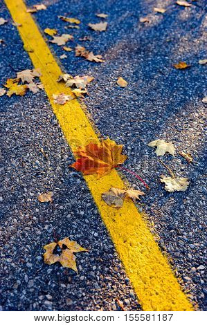 Maple leaves scattered around a yellow asphalt road line