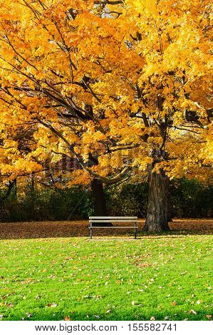A bench and a tree in the Fall in Spring Bank Park, London, Ontario