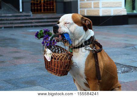 Sleepy dog is bagging or the money