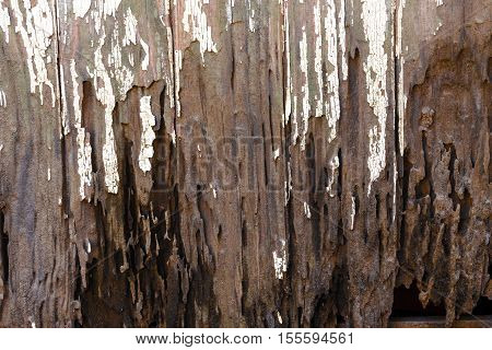 Dirty Muddy Neglected Rotten Vintage Wooden Door Panels