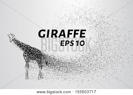 Giraffe of the particles. The giraffe consists of small circles and dots.