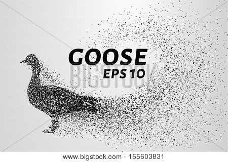 Goose of the particles. Goose consists of small circles and dots.