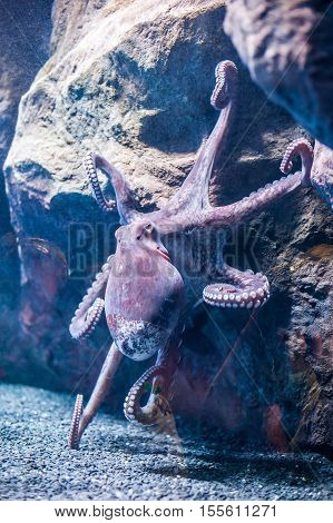 A Large Octopus With Tentacles