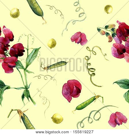 Watercolor pattern with sweet pea and green peas. Botanical illustration.