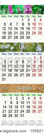 office calendar for three months June July and August 2017 with pictures of Cichorium bluebell lilies and wheat