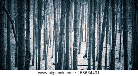 Close Up Of Spooky Trees Trunks In Fall Forest