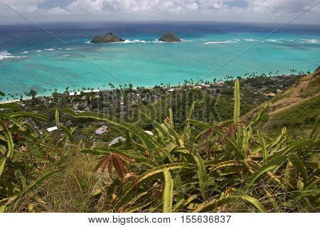 landscape with cacti with ocean view from Lanikai, Oahu, Hawaii