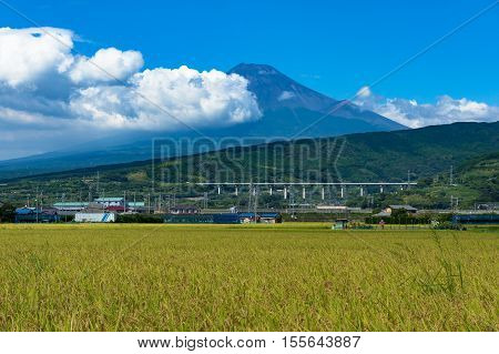Japanese Countryside Landscape Of Rice Field With Mt Fuji