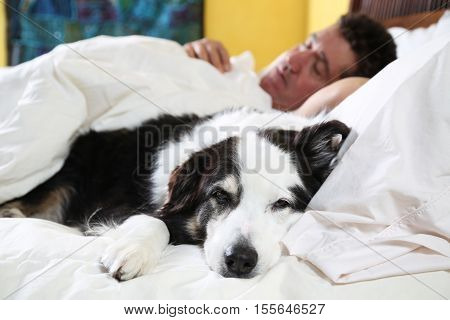 focus on drowsy dog napping on bed with his owner sleeping in background. Could be a sick day.