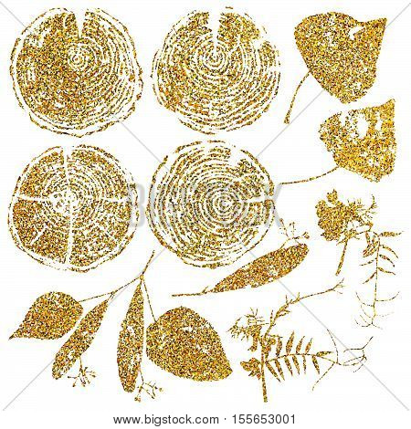 Vector wood splits and herbarium set isolated on white backdrop. Vector wood splits and herbarium set with gold glitter for your design.