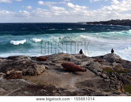 Sydney Australia - Oct 23 2016. Andrew Burton: Vessels. Sculpture by the Sea along the Bondi to Coogee coastal walk is the world's largest free to the public sculpture exhibitions.