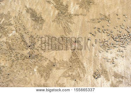 Footprints, Crab Tracks On Sand