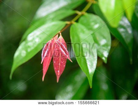 Tree Leaves In Bako National Park